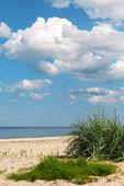 Trawa na morzu. — Zdjęcie stockowe
