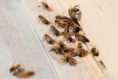 蜜蜂在蜂巢. — 图库照片