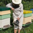 Stock Photo: Bee keeper.