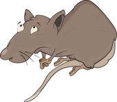 House rat. Cartoon — Stock Vector