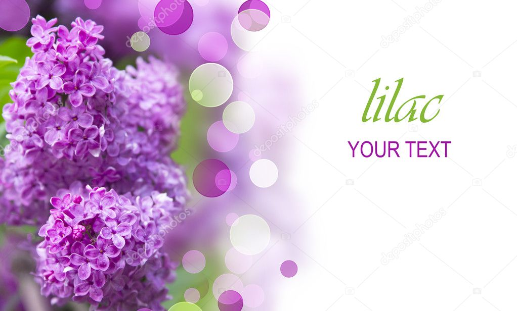 Lilac tree branch with beautiful purple flowers — Stock Photo #11143681