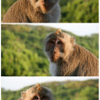 Cute monkey portrait. Indonesia, Bali island - Stock Photo