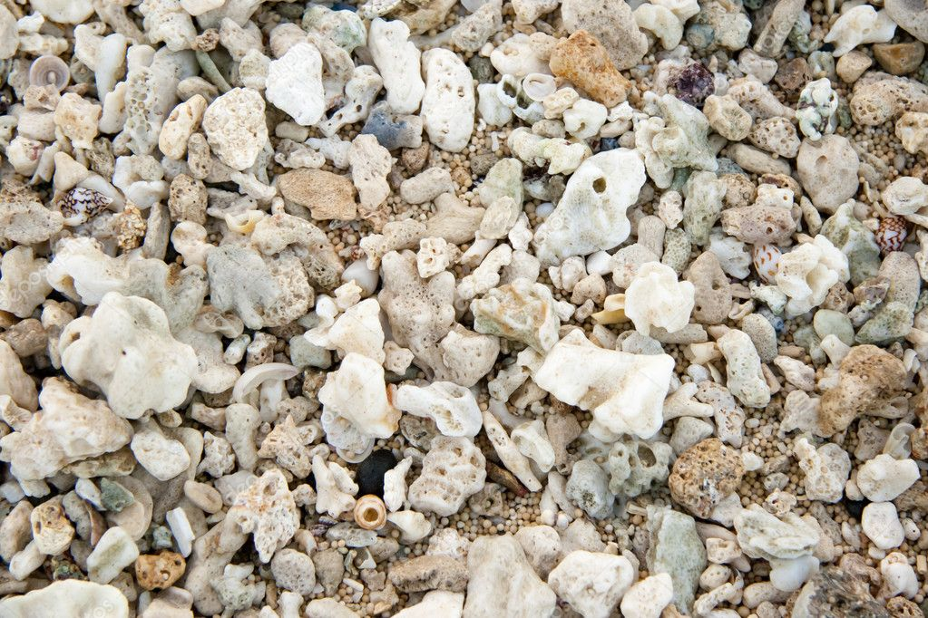 Shells on the ocean beach, background — Stock Photo #11619282