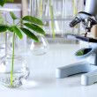 Green plants in biology laborotary — Foto Stock