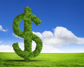 Green grass US dollar symbol — Stock Photo