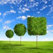 Stock Photo: Green grass shape