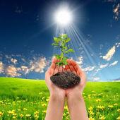 руки, держа зеленые ростки — Стоковое фото