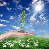 Mani tenendo verdi germogli — Foto Stock