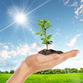 Händer som håller gröna groddar — Stockfoto