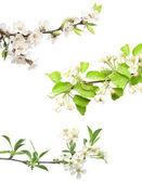 Set of flowering plant — Stock Photo