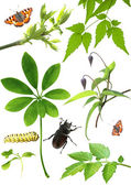Collection of green leaves and insects — Stock Photo
