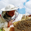 Stock Photo: Apiarist and frame with bees.