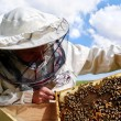 Working apiarist. - Stock Photo