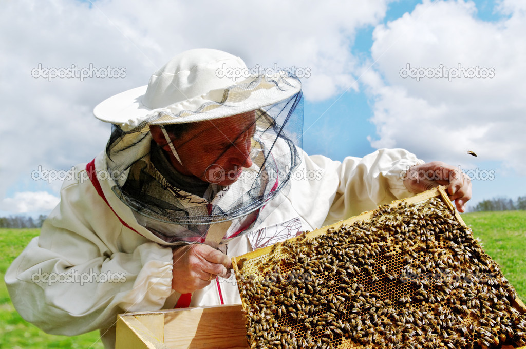 Apiarist and frame with bees, horizontal photo. — ストック写真 #11007469