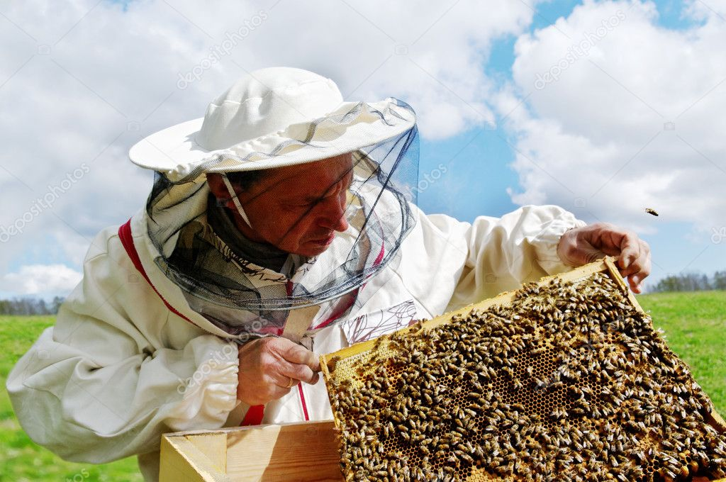 Apiarist and frame with bees, horizontal photo. — Foto Stock #11007469