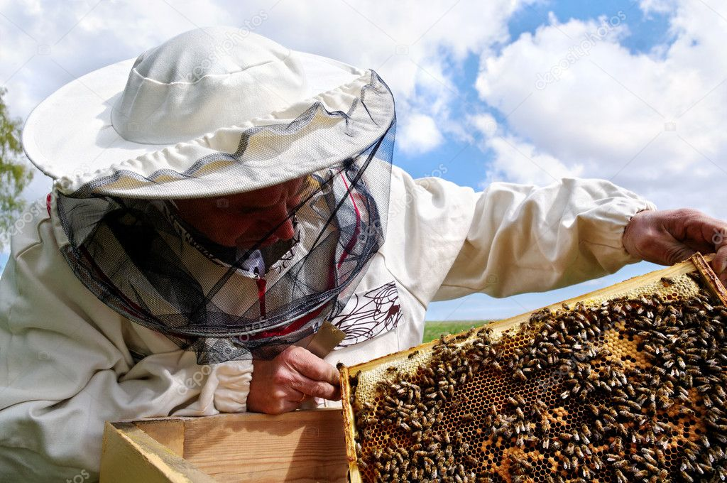 Working apiarist and  frame with bees. — Stock Photo #11007477