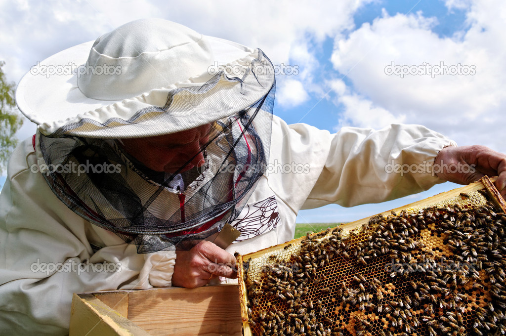 Working apiarist and  frame with bees. — Stok fotoğraf #11007477