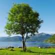 Fjord. — Stock Photo
