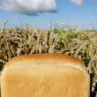 Bread and land. — Stock Photo