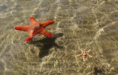 Two starfishes. — Stock Photo