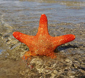 Starfish in a water. — Stock Photo