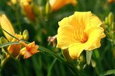 Feld flowerses — Stockfoto