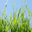 Wet green grass — Stock Photo