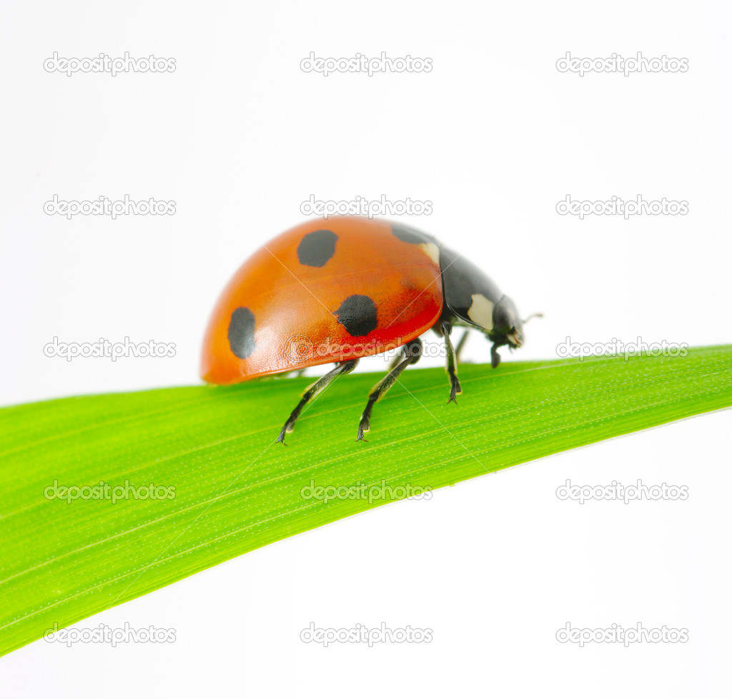 Ladybug sitting on a green leaf — Stock Photo #11461703