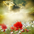 Poppy flowers - Foto Stock