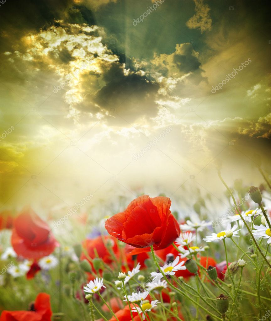 Poppy flower in the sky — Stock Photo #11428546