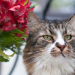 Striped cat and bouquet — Stock Photo