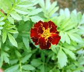 Beautiful decorative flower — Stock Photo