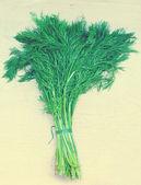 Fresh green dill — Stock Photo