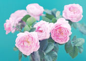 Montón de peonías en florero — Foto de Stock