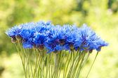 Cornflowers in vase — Stock Photo