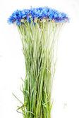 Flores en florero — Foto de Stock
