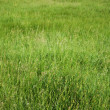 Green grass background texture — Foto de Stock