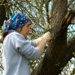 Tree pruning — Stock Photo #11896769