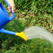 Watering — Stock Photo #11896865