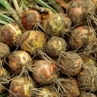 Harvested onions — Stock Photo #11896885