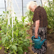 The old woman in a hothouse — Stock Photo #11679198