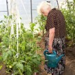 The old woman in a hothouse — Stockfoto