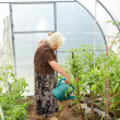 The old woman in a hothouse — Stock Photo #11679245