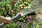 Полив сада — Стоковое фото