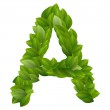 Letter A of green leaves alphabet — Stock Vector