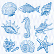 Sea collection. Original hand drawn illustration — Stock Vector #11374813