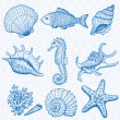 Sea collection. Original hand drawn illustration — Stock Vector