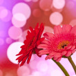 Stock Photo: Colored gerberas flowers with blur shimmer background