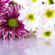 Stock Photo: Flower background