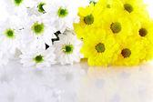 Flower background — Foto Stock